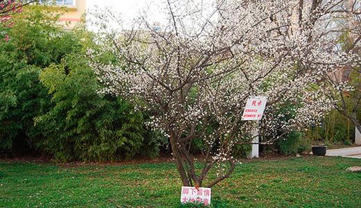 Какие ставить опоры для низкоствольных деревьев