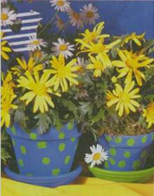 Домашнее растение Дендрантема