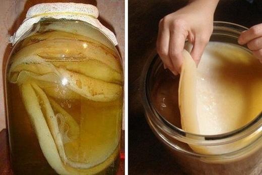 Содержание чайного гриба дома