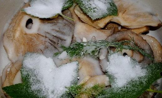 Процесс засолки груздей на зиму