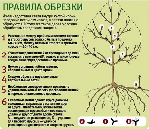 Схемы обрезки деревьев осенью