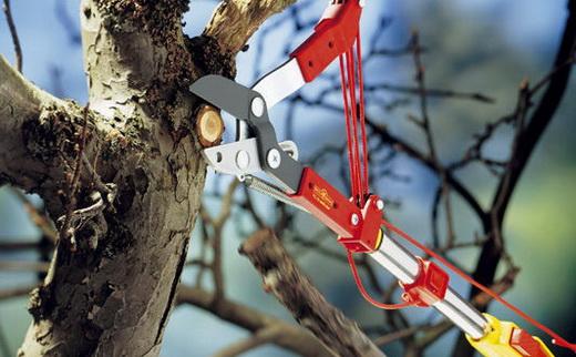 Инструменты для обрезки веток деревьев