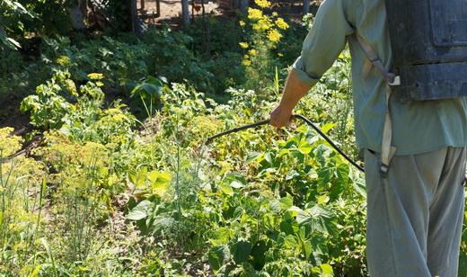 Опрыскивание от колорадского жука