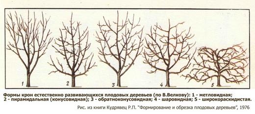 Формы крон при обрезке деревьев