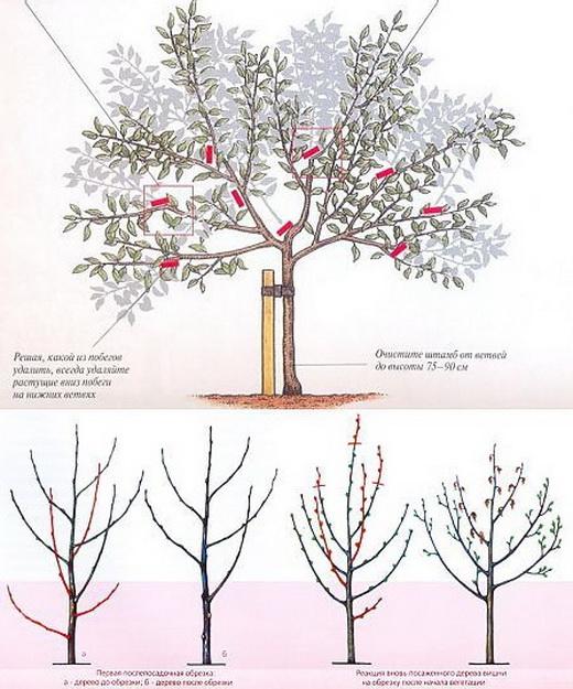 Весенняя обрезка веток вишни
