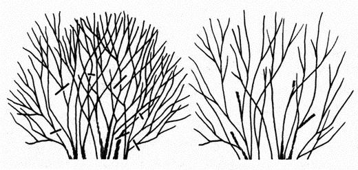 Обрезка сформировавшихся растений