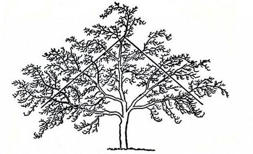 Формирование дерева после обрезки