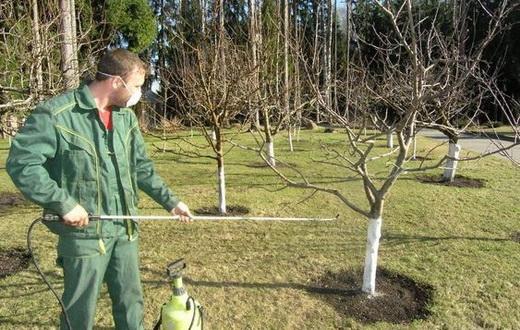 Опрыскивание деревьев для обработки