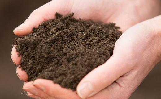 Почва для выращивания помидоров