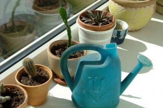 Раствор йода для полива комнатных растений