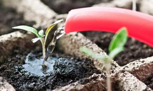 Полив рассады из семян