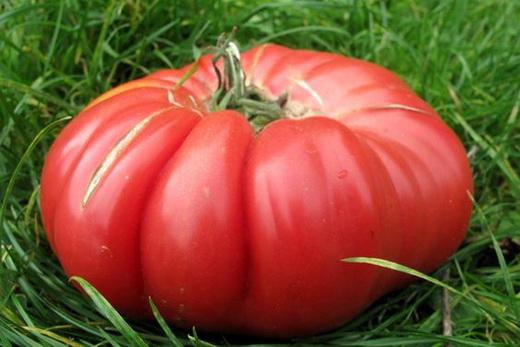 Сорт томатов малиновый