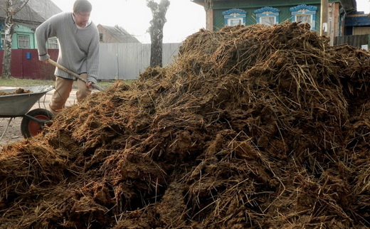 Навоз для удобрения картофеля