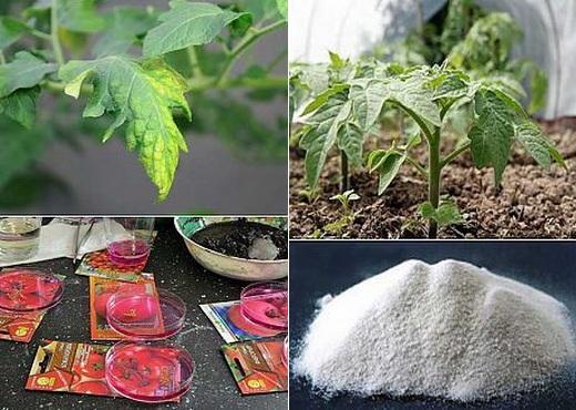 Различные удобрения для помидор