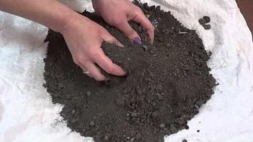 Почва для выращивания кабачков
