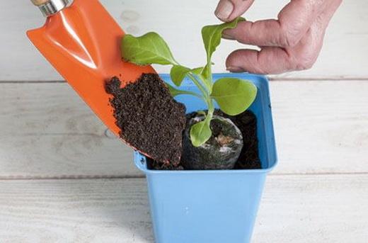 Высаживаем рассаду в грунт